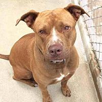 Adopt A Pet :: Rudy - Brooksville, FL