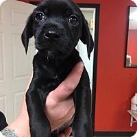 Adopt A Pet :: Spot - North Brunswick, NJ