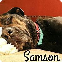 Adopt A Pet :: Samson - Fort Worth, TX
