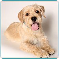 Adopt A Pet :: Kiko - Glendale, AZ