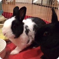 Adopt A Pet :: Hallie - Los Angeles, CA