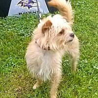 Adopt A Pet :: Robbie - Winder, GA