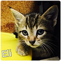 Adopt A Pet :: Eli - Sanford, NC