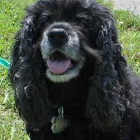 Adopt A Pet :: Ari - Oxford, WI