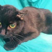 Adopt A Pet :: Batina - Twinsburg, OH