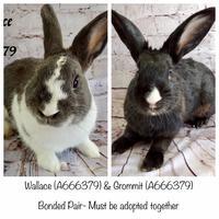 Adopt A Pet :: *GROMIT - Camarillo, CA