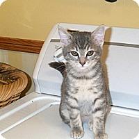 Adopt A Pet :: Sandy - Orlando, FL