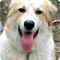 Adopt A Pet :: KAMERON - Wakefield, RI