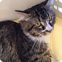 Adopt A Pet :: Castle - Santa Monica, CA