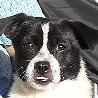 Adopt A Pet :: Louise - Oakley, CA