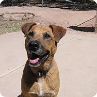 Adopt A Pet :: Courtesy-Roscoe