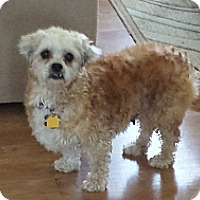 Adopt A Pet :: Olive - Mt Gretna, PA