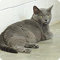Adopt A Pet :: Smurfee - Pineville, NC