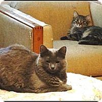 Adopt A Pet :: Piper - Galloway, NJ
