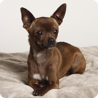 Adopt A Pet :: Katy - Oakland, CA