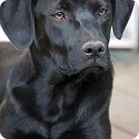 Adopt A Pet :: Sara - Lewisville, IN