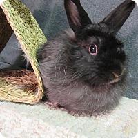 Adopt A Pet :: Talena - Newport, DE