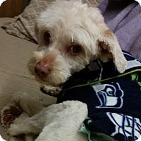 Adopt A Pet :: Wags - Kirkland, WA