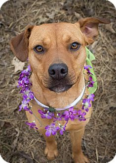 Terrier (Unknown Type, Medium) Mix Dog for adoption in Kingston, Tennessee - Smiley Cyrus