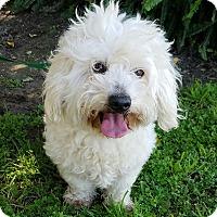 Adopt A Pet :: Fancy - Los Angeles, CA