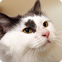 Adopt A Pet :: MARCELINE - Royal Oak, MI