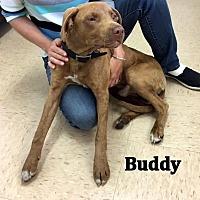 Adopt A Pet :: Buddy - Cairo, GA