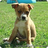Adopt A Pet :: May/ADOPTED - PRINCETON, KY