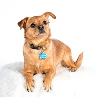 Adopt A Pet :: Waffles - St. Louis Park, MN