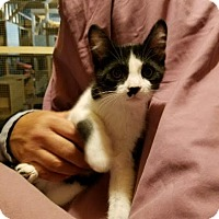 Adopt A Pet :: Zandy - Cardwell, MT