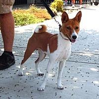 Adopt A Pet :: Yang - Lathrop, CA