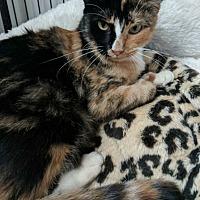 Adopt A Pet :: Chesna - Aurora, CO