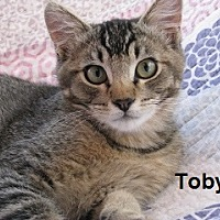 Adopt A Pet :: Toby - Polson, MT