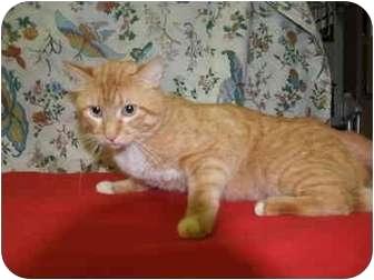 Domestic Shorthair Cat for adoption in El Cajon, California - Mason