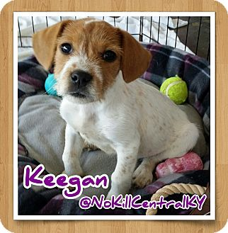 Terrier (Unknown Type, Small) Mix Puppy for adoption in Lancaster, Kentucky - Keegan