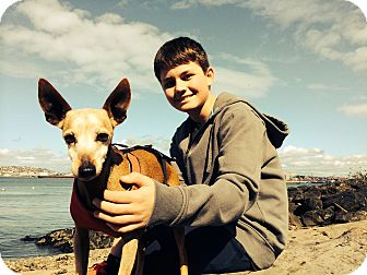Miniature Pinscher/Whippet Mix Dog for adoption in North Bend, Washington - Calli