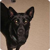 Adopt A Pet :: Sam - Pending - Vancouver, BC
