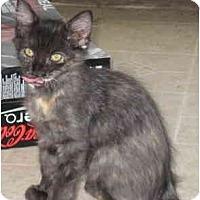 Adopt A Pet :: Mocha - Davis, CA