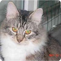 Adopt A Pet :: Daisy - Pendleton, OR