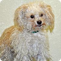 Adopt A Pet :: J.J. - Port Washington, NY