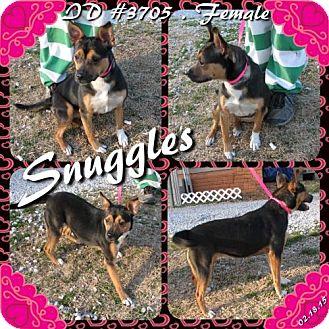 Australian Kelpie/Collie Mix Dog for adoption in Corinth, Mississippi - Snuggles
