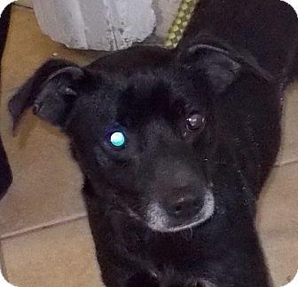 Terrier (Unknown Type, Medium) Mix Dog for adoption in Middletown, New York - Banjo
