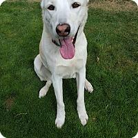 Adopt A Pet :: Dodger - Gilbert, AZ