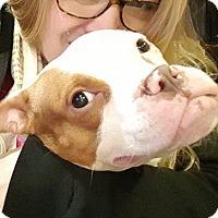 Adopt A Pet :: Peaches - Raritan, NJ
