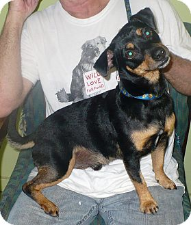 Dachshund Mix Dog for adoption in Eastpoint, Florida - Clyde