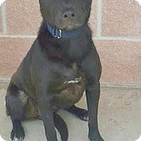 Adopt A Pet :: 384691 Natalie - San Antonio, TX