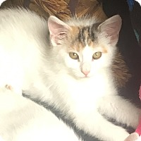 Adopt A Pet :: Tinker Bell and Liza - Southington, CT