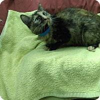 Adopt A Pet :: Mavis - University Park, IL