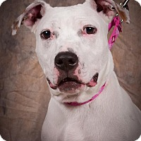 Adopt A Pet :: Susie Q - Dayton, OH