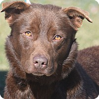 Adopt A Pet :: Copperfield - Huntley, IL