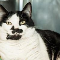 Adopt A Pet :: Barbara Ann - Bellevue, WA